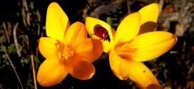 Çukurova sarı sıcağında, portakal çiçeği ve şiirleşme zamanı (şiir)